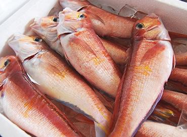 鮮魚通販|アマダイ