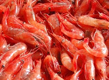 鮮魚通販|甘えび