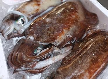 鮮魚通販|アオリイカ