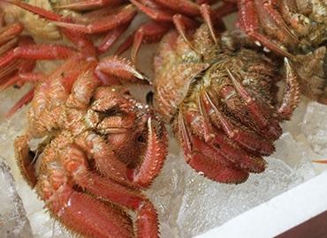 鮮魚通販|ケガニ