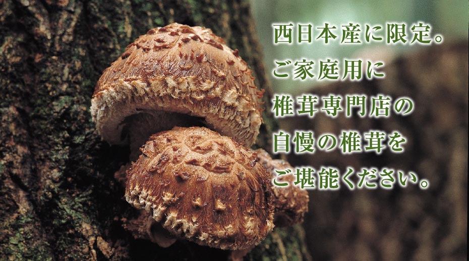 椎茸 家庭用イメージ