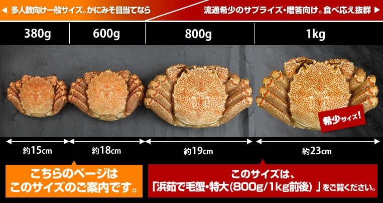 毛蟹の大きさ比較