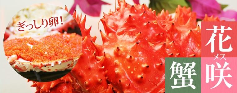 北海道でしか出会えない希少な花咲蟹