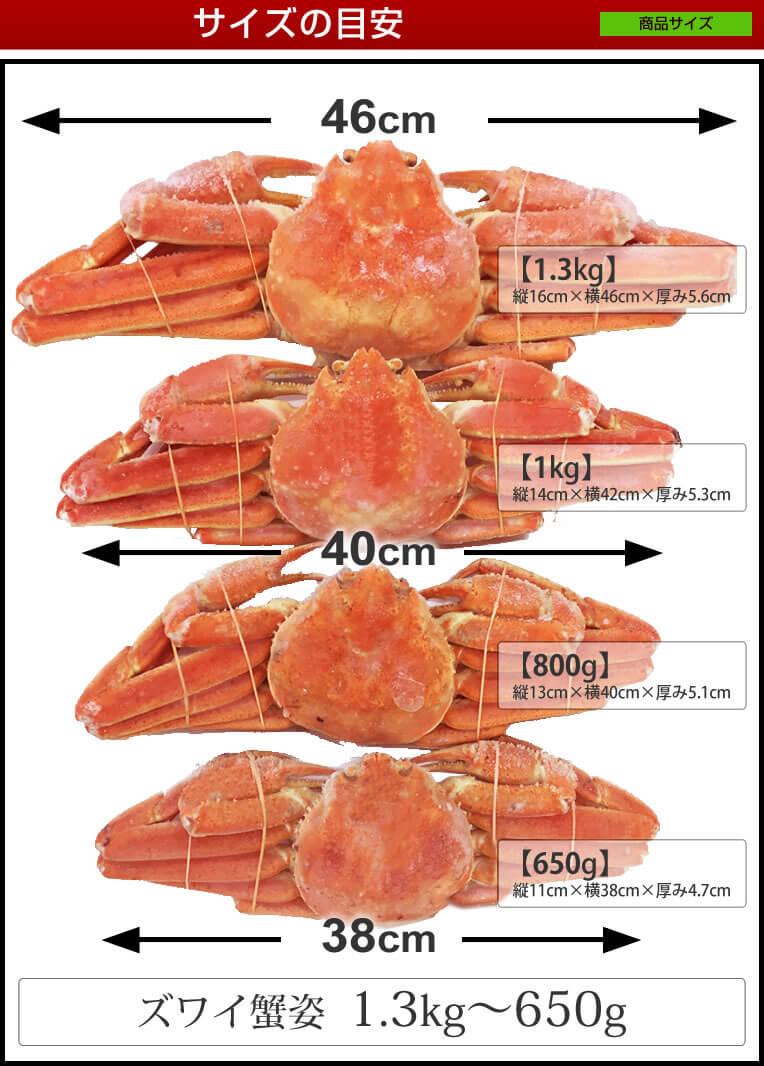 ずわい蟹サイズ比較