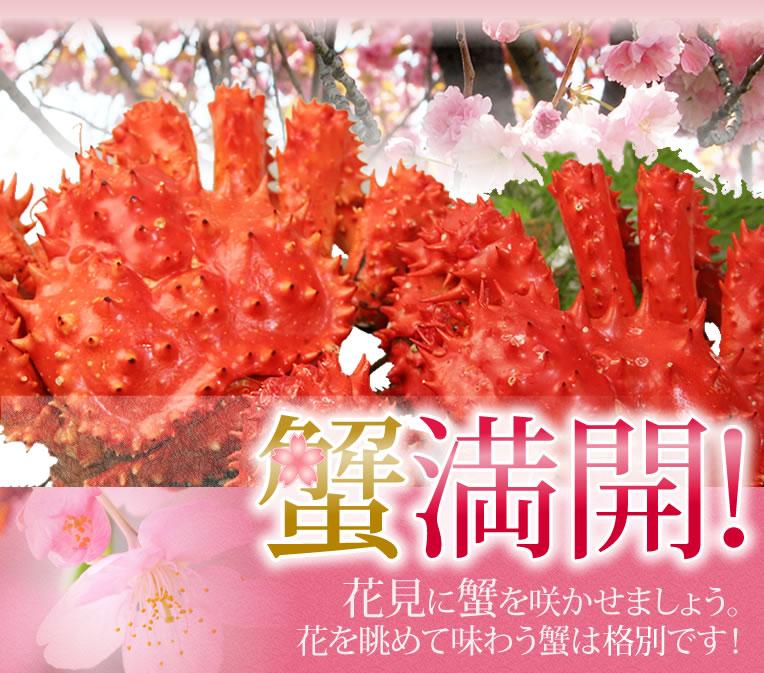 かにまみれ-お花見特集