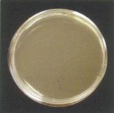 リンダ・シルバーPH7プラス/除菌効果比較(洗浄後)