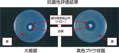 抗菌性評価結果/ユシロ バリア機能付き低臭コート