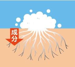 除菌・漂白剤/サラヤ カビ除去クリーナー