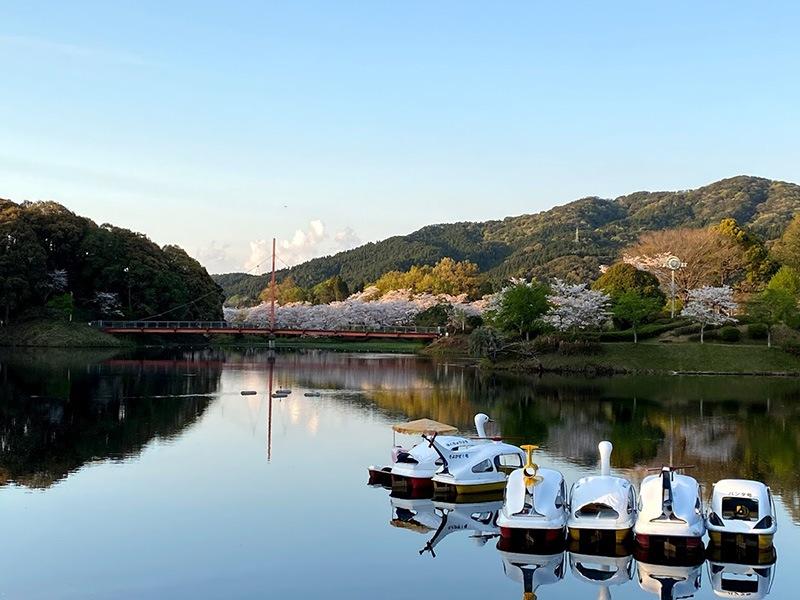 石山観音池の桜