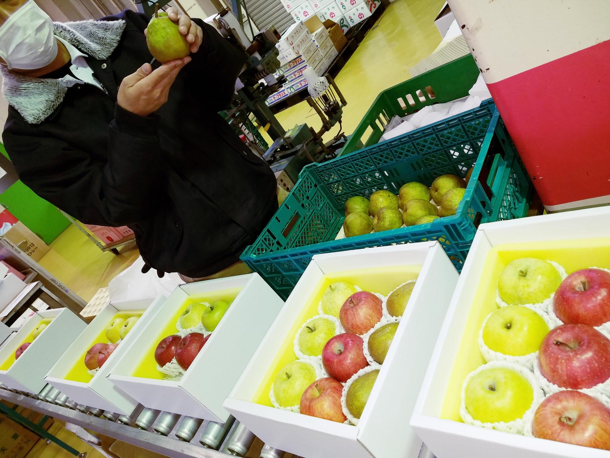 りんごと洋梨詰め合わせ