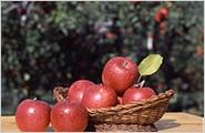 岩手のりんご