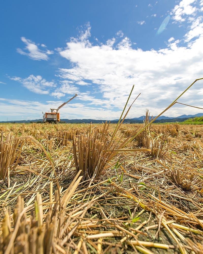 肥沃な土を育てる