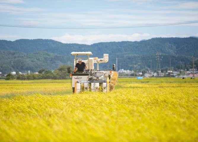 良い環境の中で稲は立派な稲穂を実らせる