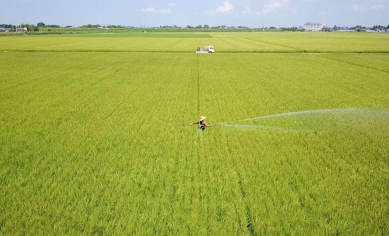 こだわりの農法:肥沃な土を育てる