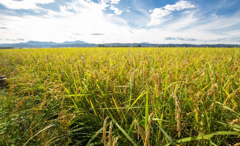 こだわりの農法:新潟の豊かな気候