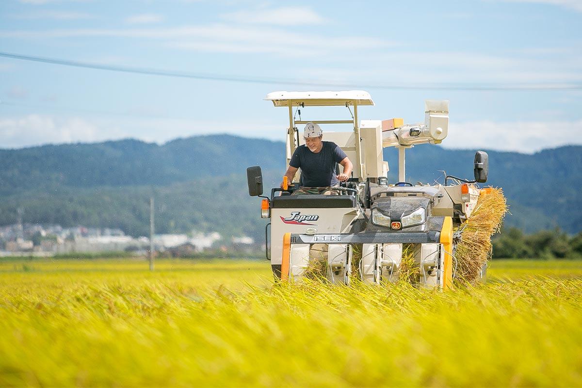 化学肥料は一切使いません