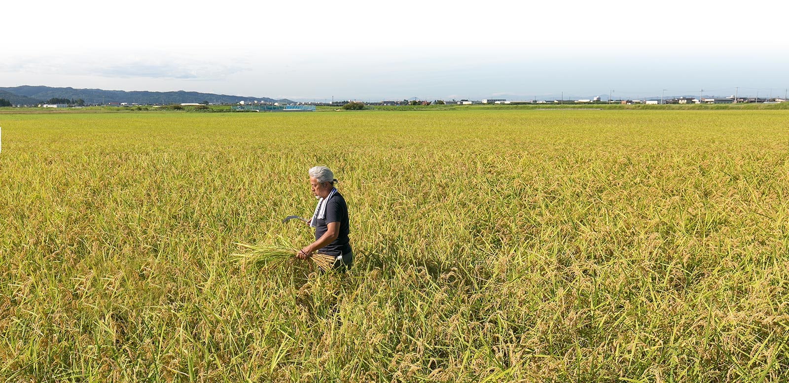 300年以上続く、米づくりへのこだわり