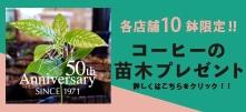 可否茶館50周年コーヒー苗木プレゼント