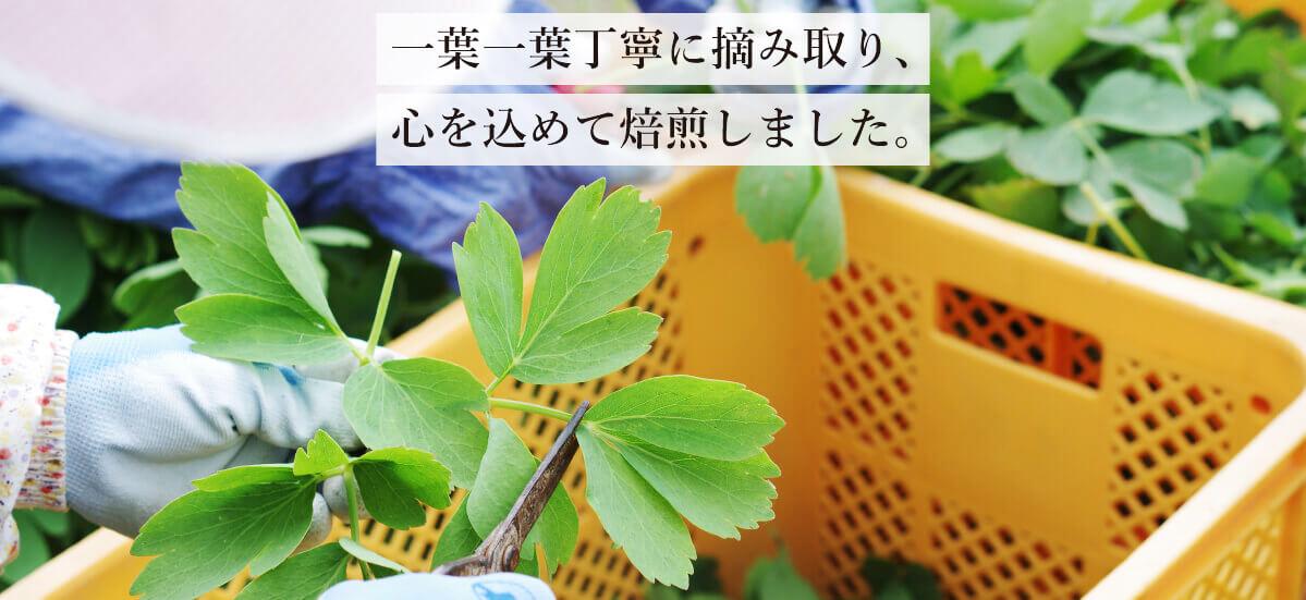 島で育った長命草を独自の焙煎方法で美味しく健康なお茶に仕上げました。