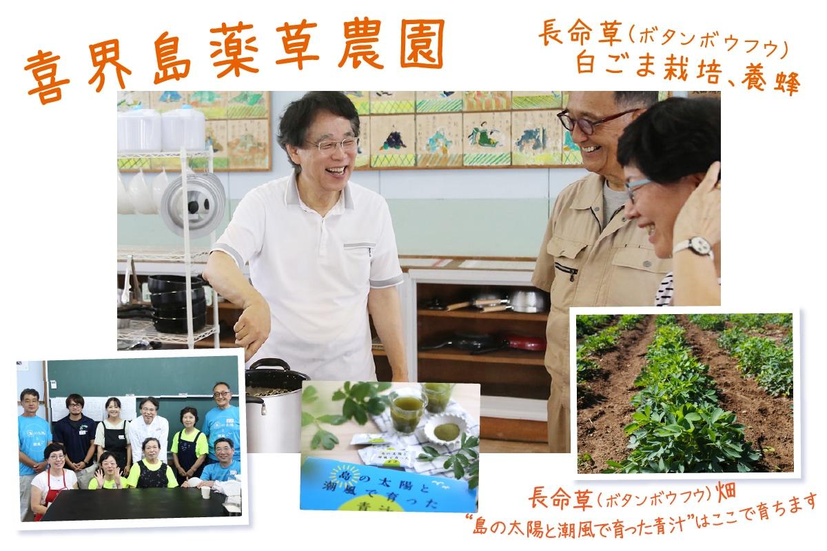 「喜界島薬草農園」長命草(ボタンボウフウ)の栽培、加工品の製造販売