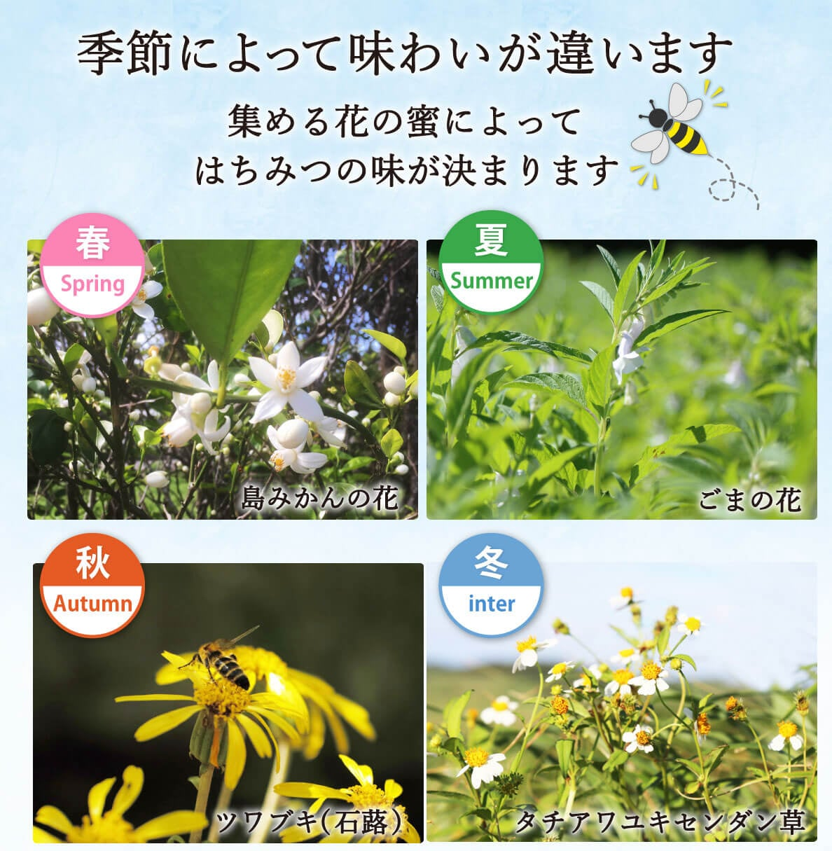 一年中花が咲いている喜界島で四季で違った味わいのはちみつが採れます