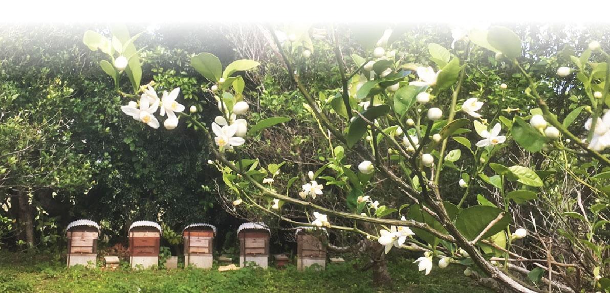 喜界島薬草農園の養蜂