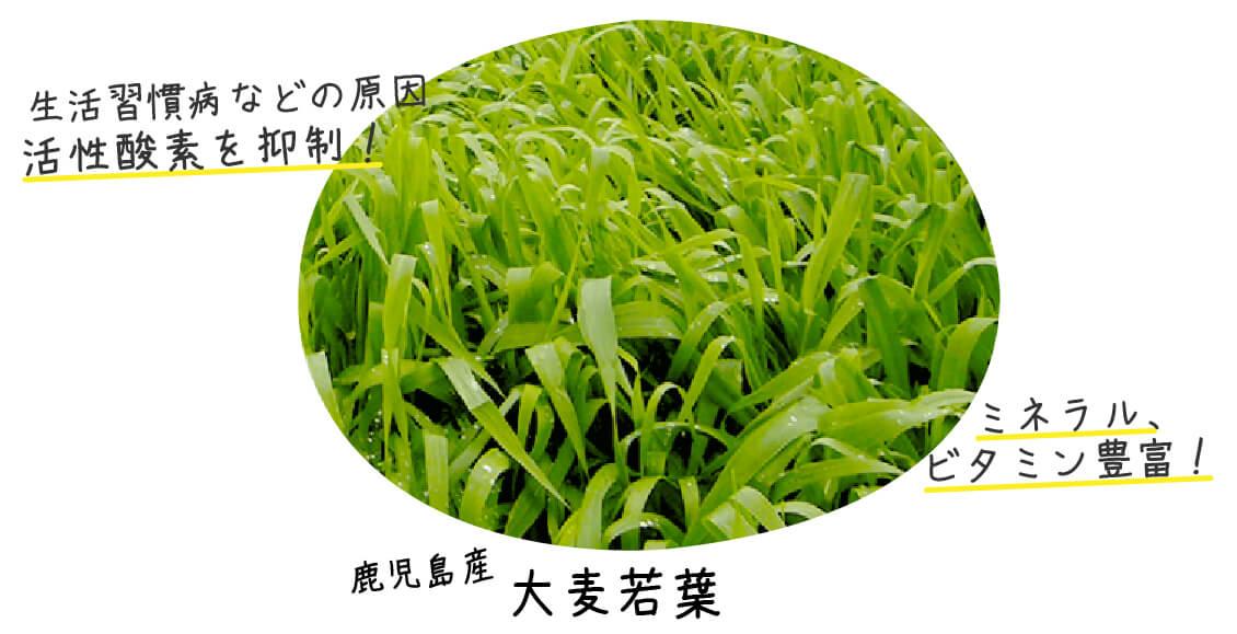 活性酵素を抑制する大麦若葉