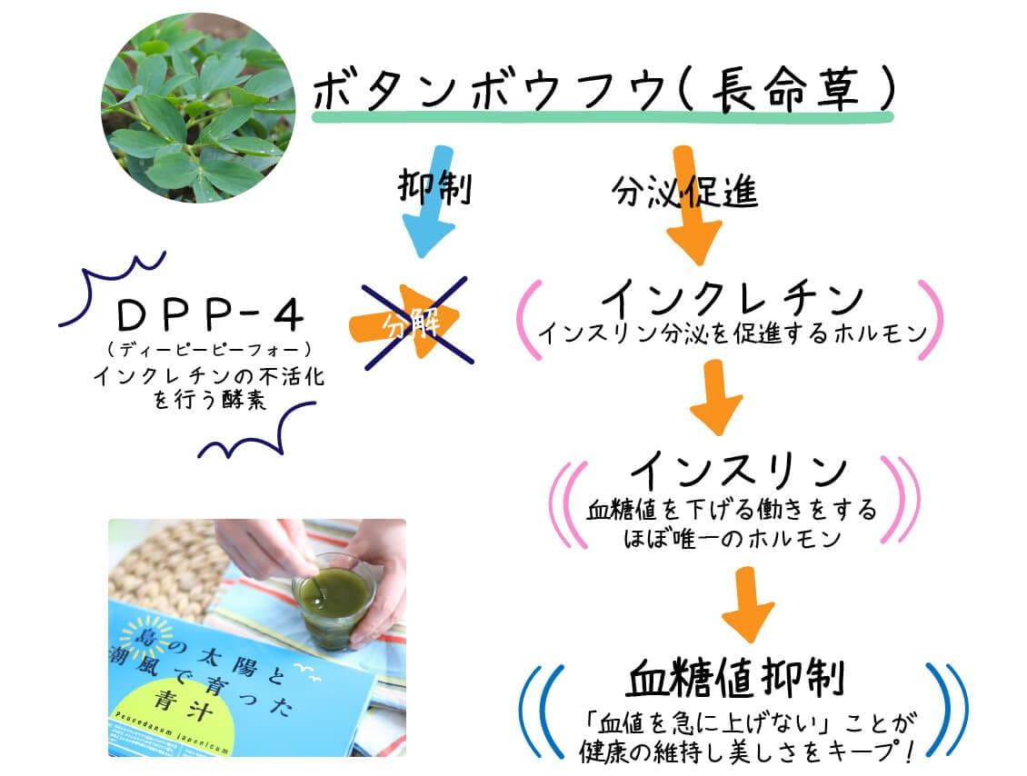 ボタンボウフウ(長命草)の血糖値抑制のメカニズム