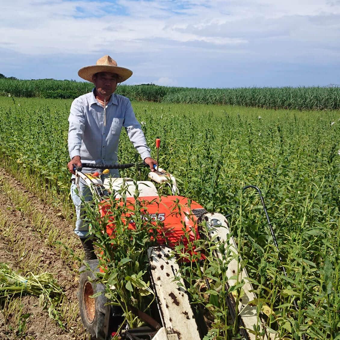 無農薬・化学肥料不使用で丹誠込めて育てています
