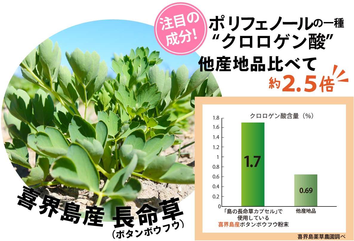 喜界島産長命草はポリフェノールの一種クロロゲン酸が他産地品に比べて約2.5倍!