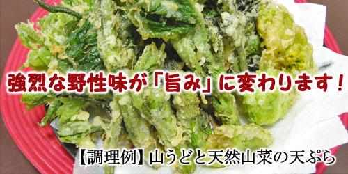 山うど(ヤマウド)と天然山菜の天ぷら