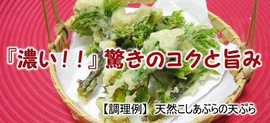 こしあぶら(コシアブラ)の天ぷら