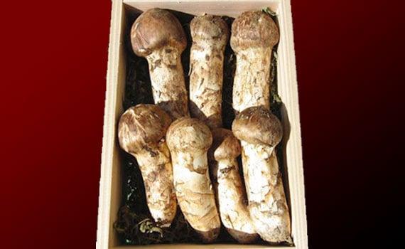 松茸(マツタケ)販売!岩手県産の一級品