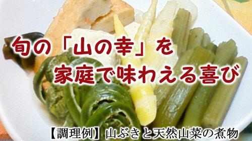 山ふき(ヤマフキ)と天然山菜の煮物