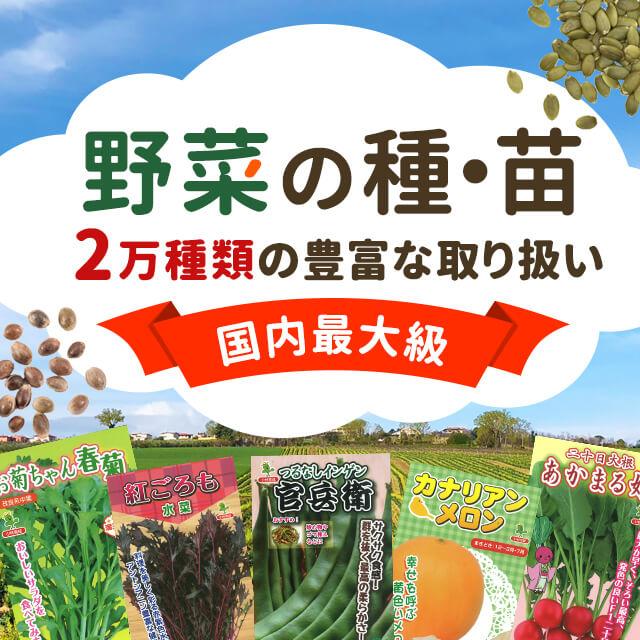 野菜の種・苗 2万種類の豊富な取り扱い 国内最大級