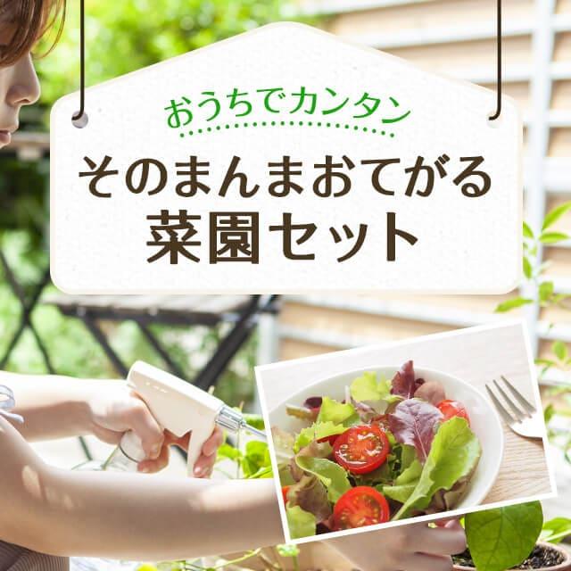 おうちでカンタン そのまんまおてがる菜園セット 新鮮なサラダ用ベビーリーフが簡単に収穫できます。 特別価格2,800円
