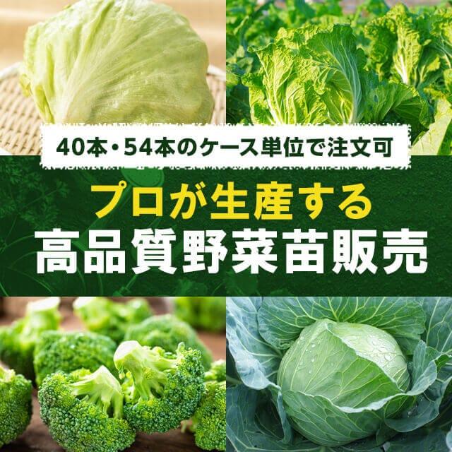 40本・54本のケース単位で注文可 プロが生産する高品質野菜苗販売