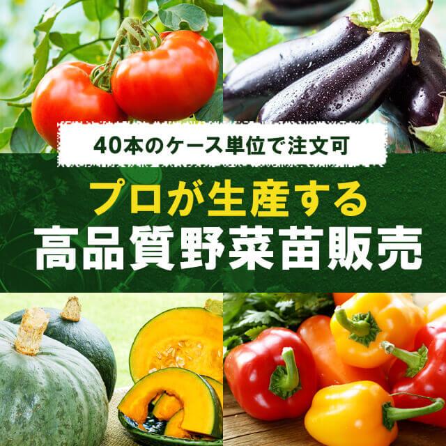 40本のケース単位で注文可 プロが生産する高品質野菜苗販売