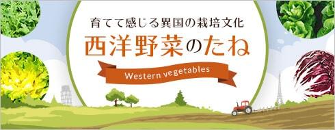 育てて感じる異国の栽培文化 西洋野菜のたね