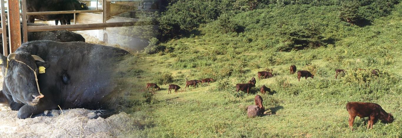 森谷の肉 黒毛和牛