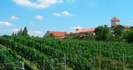 ワイン農園