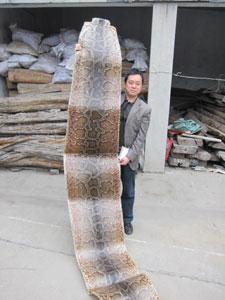 ニシキヘビ皮