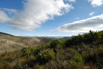 ハニーブッシュ南アフリカ