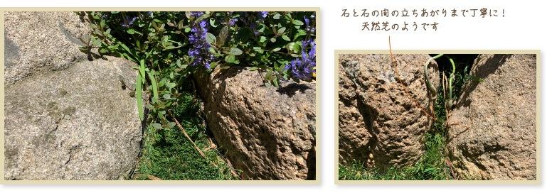 石と石の間の立ちあがりまで丁寧に!天然芝のようです