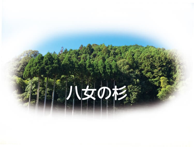 八女の杉イメージ