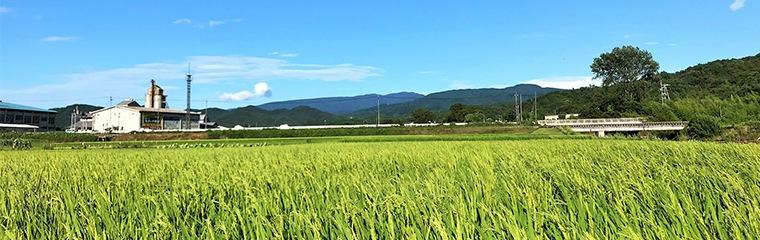 田中農場の田んぼの風景写真