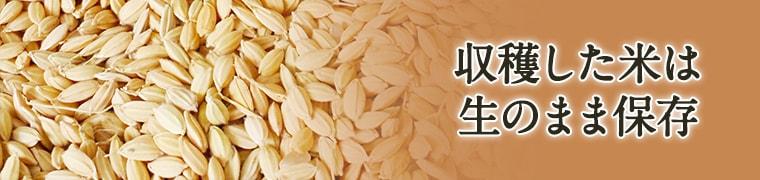 収穫した米は生のまま保存イメージ