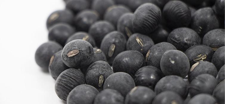 鳥取・田中農場の丹波黒豆は国内生産量0.01%以下の希少な日本在来種