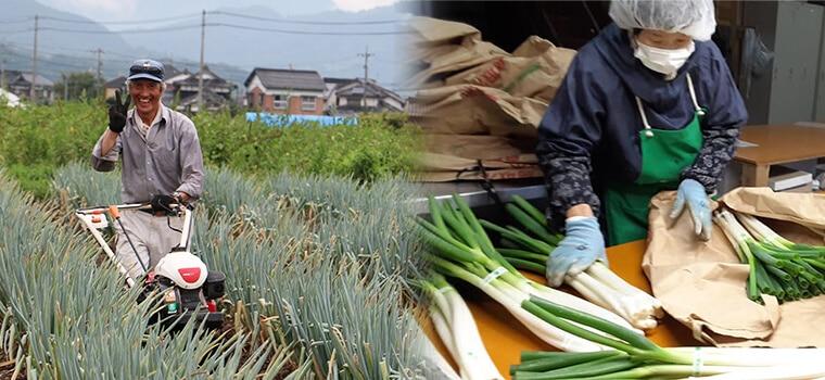 鳥取・田中農場の白ねぎ栽培の担当は谷口リーダーです