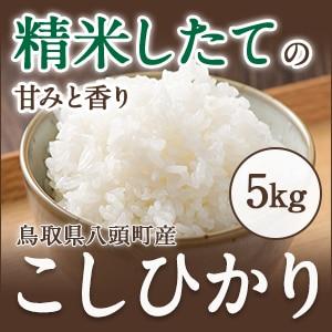 2019令和元年産 新米★特別栽培米★こしひかり白米5kg【甘み・粘り・つや3拍子そろったお米】